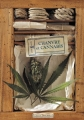 "Afficher ""Chanvre et cannabis"""
