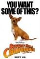"Afficher ""Le Chihuahua de Beverly Hills"""