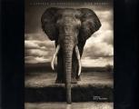 vignette de 'L' Afrique au crépuscule (Nick Brandt)'