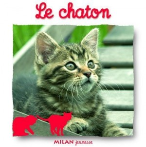 """Afficher """"Le chaton"""""""