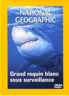 """Afficher """"Grand requin blanc sous surveillance"""""""