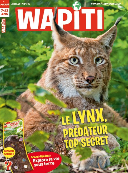 Wapiti n° 385 LE LYNX, PREDATEUR TOP SECRET