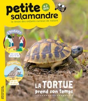 """Afficher """"Petite salamandre n° 24 La tortue prend son temps"""""""